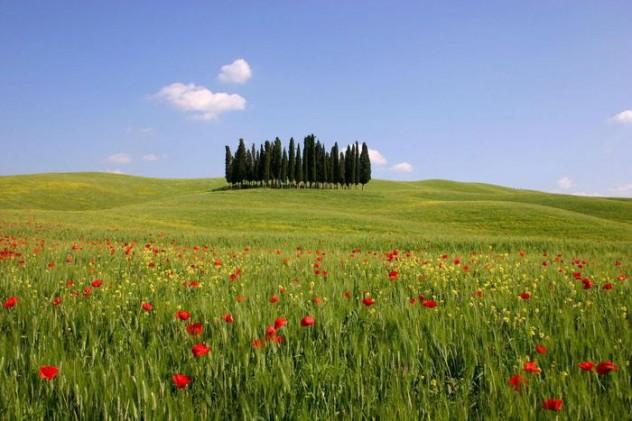 Mostre: giardini effimeri e veri per 'Pienza e i fiori'