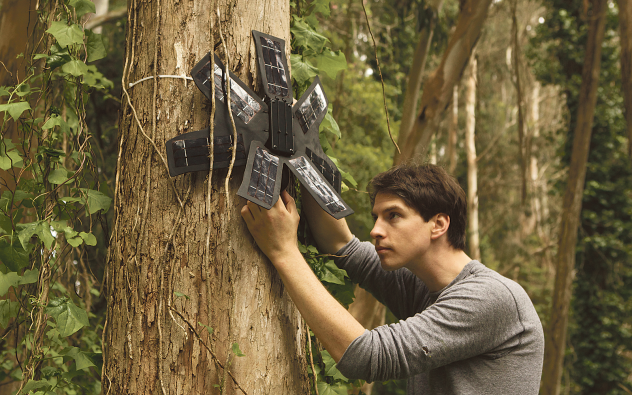 foto rainforest (1)