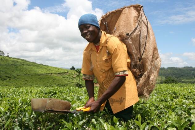 Malawi 2010