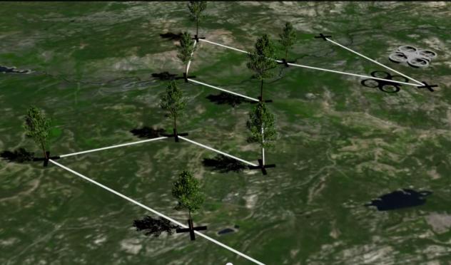 droni alberi 1