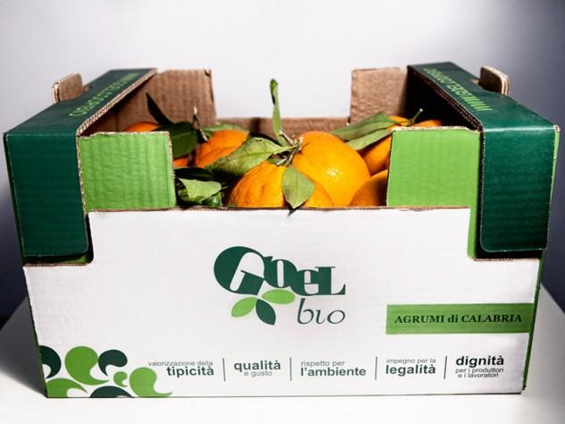 scatola_arance