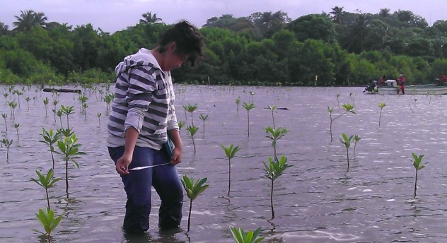 estudiantes realizando monitoreos de plantas reforestadas