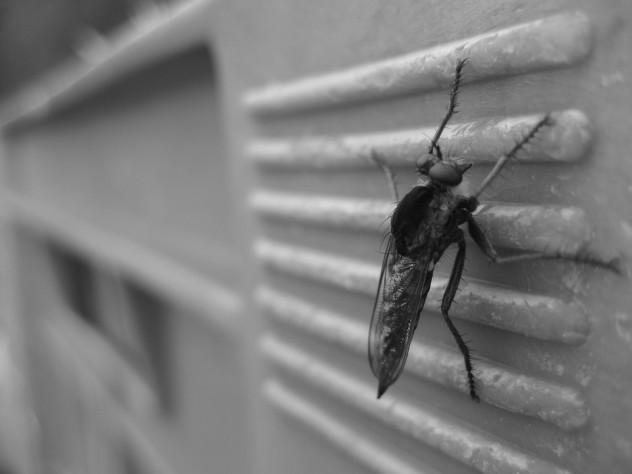 mosquito-450394_960_720