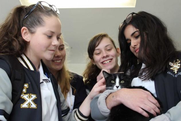 terapia_scuola_gatti