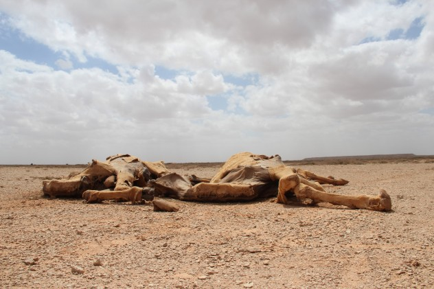 Drought in Somalia