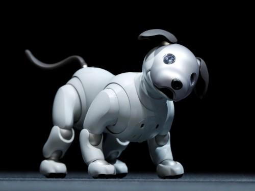 Aibo L'ultimo nato della stirpe robotica di Sony è un vero gioiello per funzioni e imitazione del vero. Non è ancora disponibile in Europa, ma chi ne fosse irresistibilmente attratto lo può comprare online intorno ai 3 mila euro.