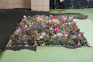 Enciclopedia dei fiori da giardino - libri ritagliati -dimensioni ambientali 2009