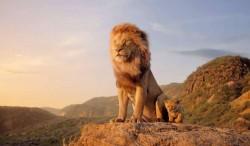 Il re leone3