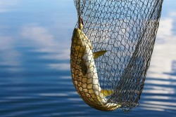 pesce di lago (1)