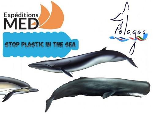 plastica balene pelagos