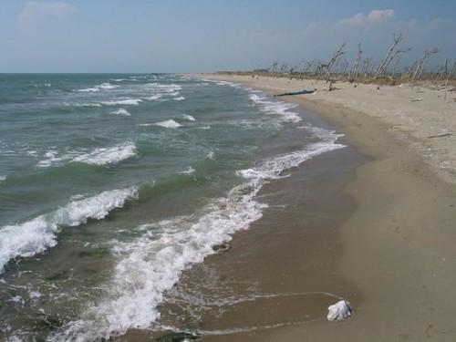 spiaggia-di-san-rossore