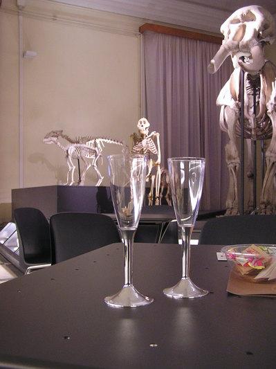 Happy Hours al Museo di Zoologia.JPG