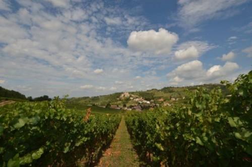 Monsupello: vigne e panorama di Torricella Verzate