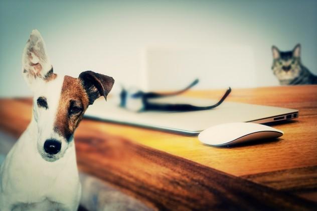 Scongiurato rischio pignoramento per i «pet». Gli ...