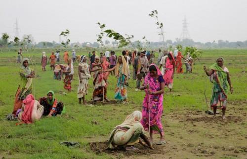 india-planta-arvores-em-24-horas
