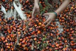 olio-di-palma-foto-a-chiudere-articolo-632x421