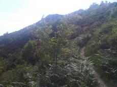 bosco.jpg.jpg
