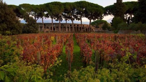 Vigneti a Pompei (foto da Azienda Mastroberardino)