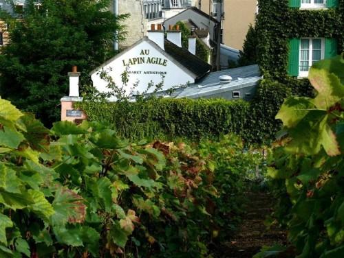 Le vigne di Clos Montmartre a Parigi che hanno una superficie di 1.556 metri quadrati