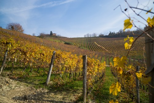 Le vigne di Neigelle