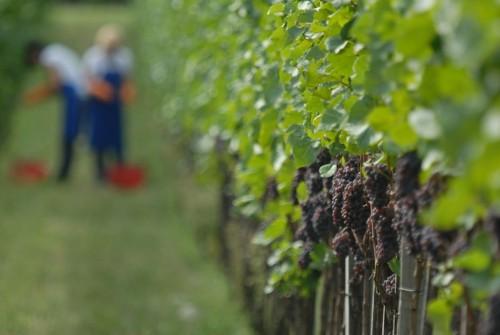 Le vigne di Lagader