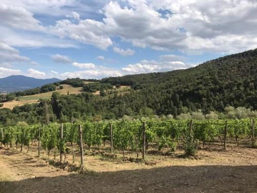 Le vigne di Le Macioche