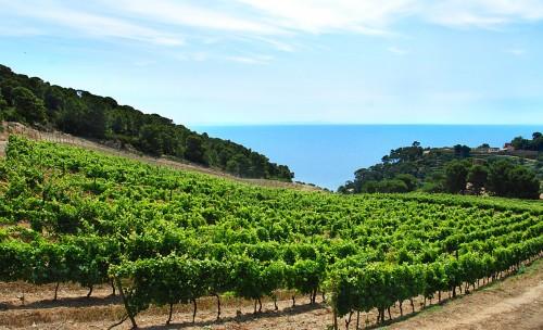 Le vigne della Gorgona