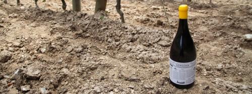 IL vino prodotto da Frescobaldi con i detenuti