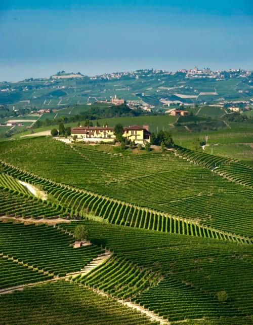 Le vigne di Cogno