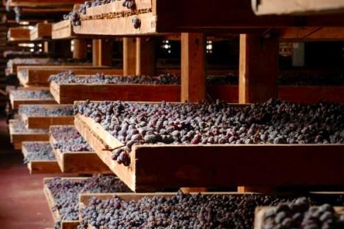 L'appassimento delle uve per l'Amarone