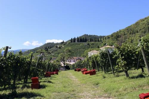 Le vigne di Nino Franco