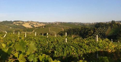 Le vigne della Distesa