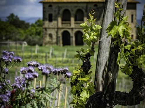 Le viti antiche di Biondi-Santi