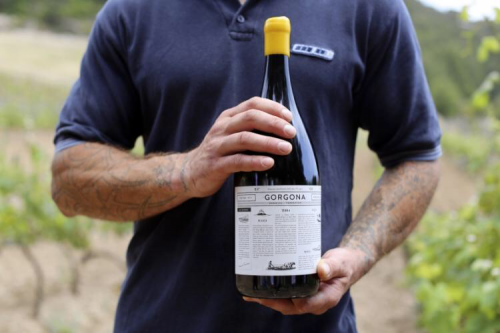 Il vino di Gorgona, prodotto da Frescobaldi con i detenuti dell'Istituto di pena