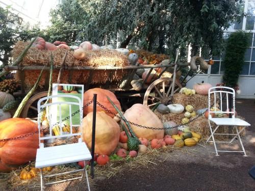 La palmenhaus allestita per Haloween (ph. Fanti)