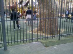Roma- San Cosimato 3.jpg