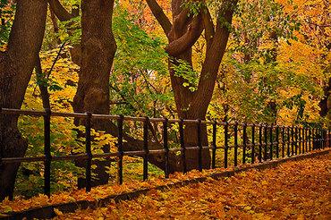 autumn central park 2.jpg