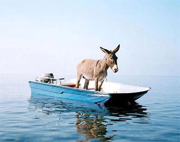funny-donkey-in-boat.jpg