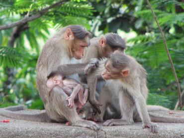 3 scimmie.jpg