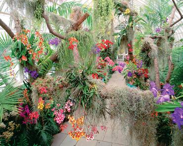Orchidee galleria.jpg