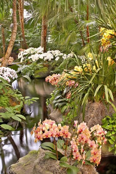 Orchidee laghetto.jpg