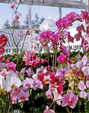 orchidee serra1.jpg
