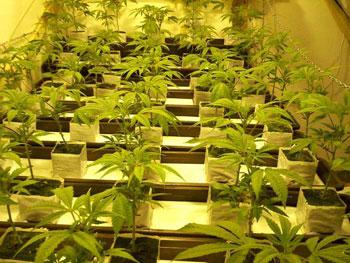 growers_01.jpg