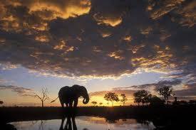 Elefante e nuvole a.jpg
